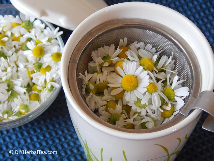 How To Make Chamomile Tea From Your Own Garden