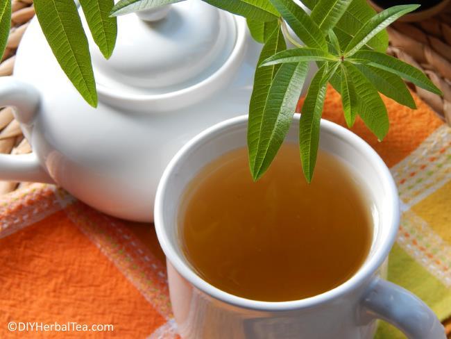 Teapot, herbs and cup of warm lemon verbena herbal tea