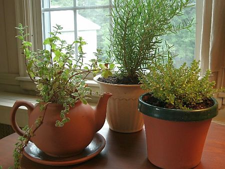 the truth about indoor herb gardening, Natural flower