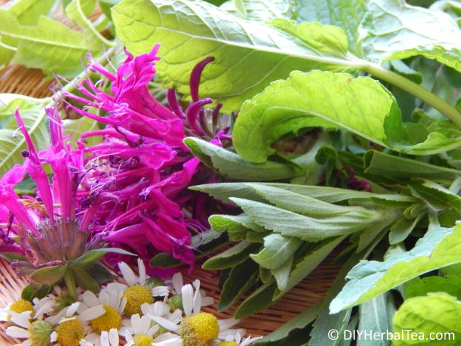Herb leaves and flowers