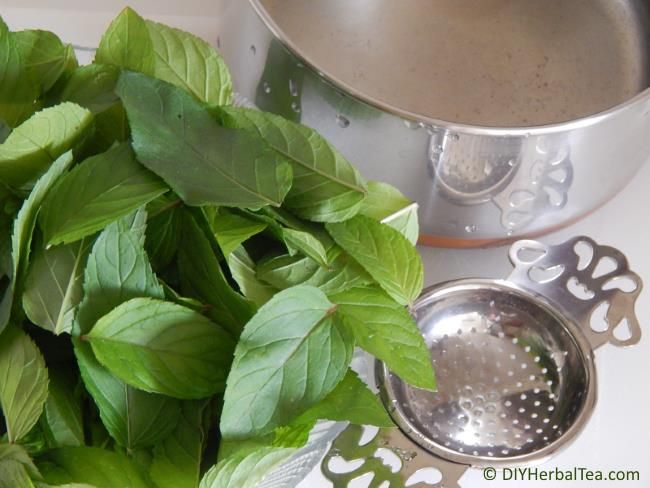 Fresh chocolate mint leaves, water and a strainer