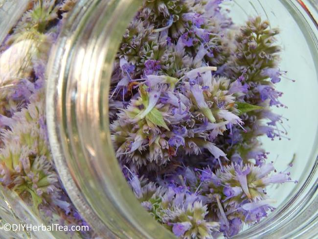 Anise Hyssop flowers in glass jar