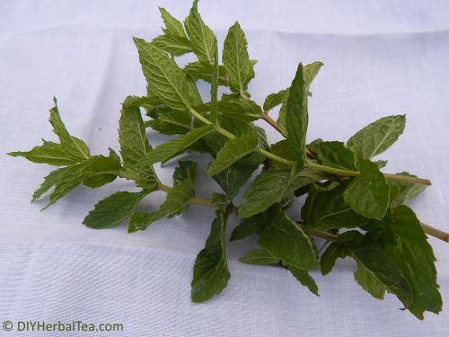 small bunch of tea herbs