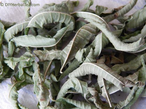 dried tea herbs