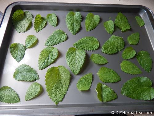 mint for oven drying